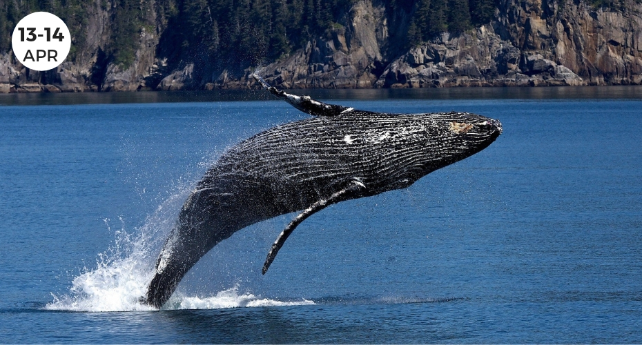 Welcome the Whales, Langley, Gray Whales, Whidbey Island, event, parade, festival, washington, windermere
